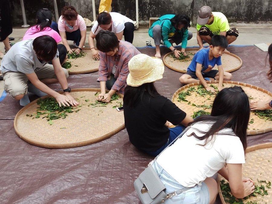茶農體驗-手揉茶習作時間